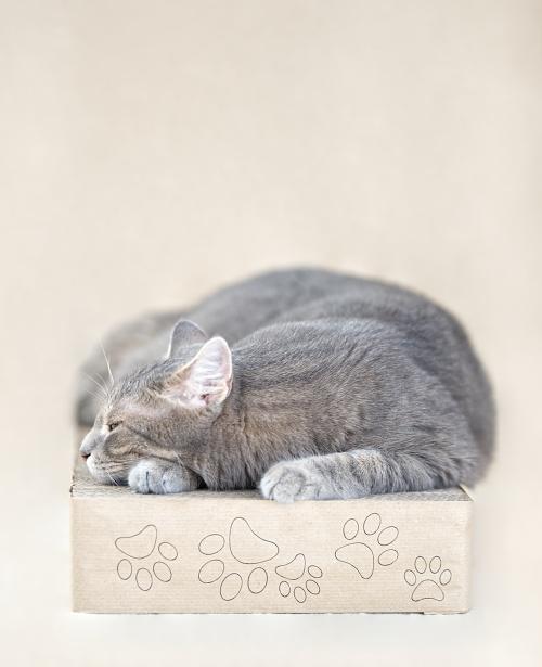 Nový produkt v e-shopu: hranaté kočičí škrabadlo